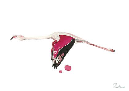 Flamingo volando