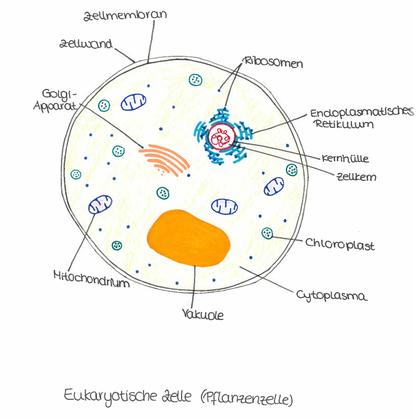 Prokaryoten Prokaryotische Zelle Unterschiede 15