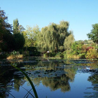 Der Teich im Garten