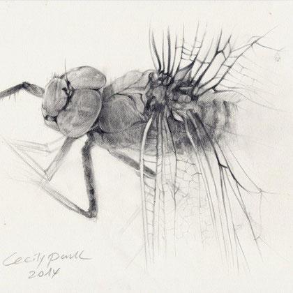 Insekten zeichnen, Tiere zeichnen, Zeichenkurs, Kunstschule Düsseldorf