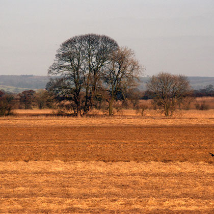 Farmland and trees, Vale of York