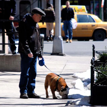 Snifter: Man and dog, Greenwich Village