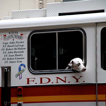 Firedog and memorial to fallen comrades on 9/11 (11 September 2001) at event remembering the fire at the Triangle Shirtwaist Company factory in New York City on March 25, 1911 killed 146 workers.