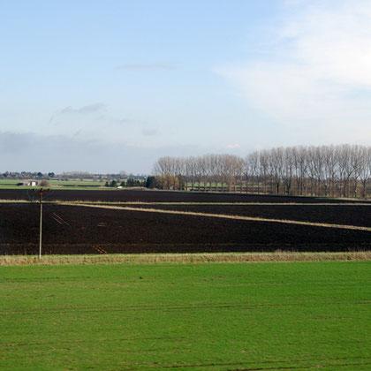 Fenland soils