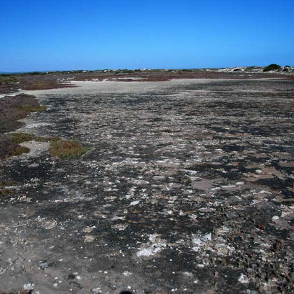 Salt pan, Langebaan Lagoon