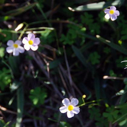 Flowers at Black Rocks