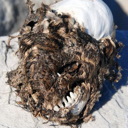 Baboon skull near Olifantbos