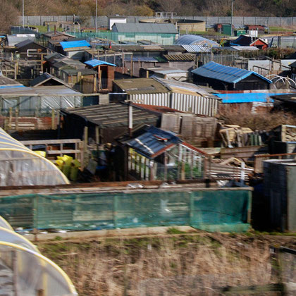 Allotments, Newcastle
