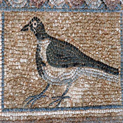 Magpie, 5th century Roman mosaic, House of Eustolis, Kourion