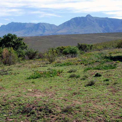 Bontebok Park from the viewing platform