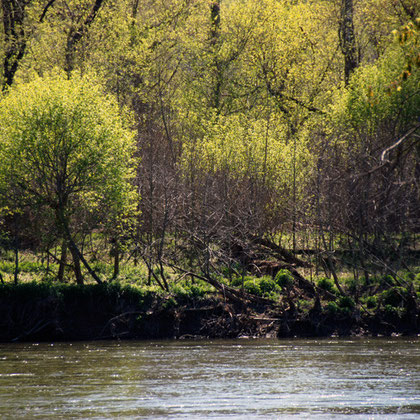 Greens of spring on the Potomac