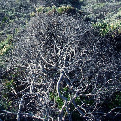 Wind blown fynbos