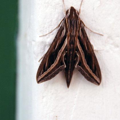 Moth at Montagu