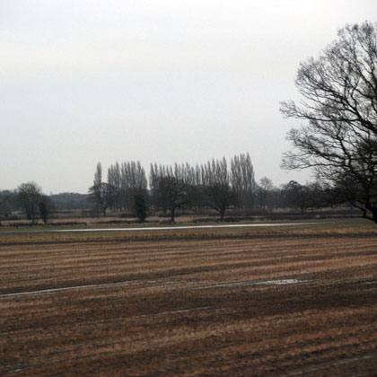 Waterlogged fields and Lombardy poplars between York and Doncaster