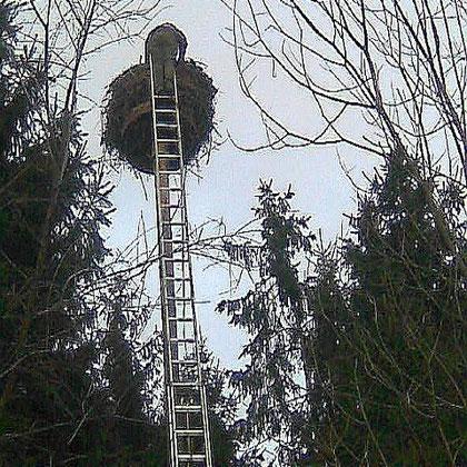 16.03.2010 Nest Reinigung