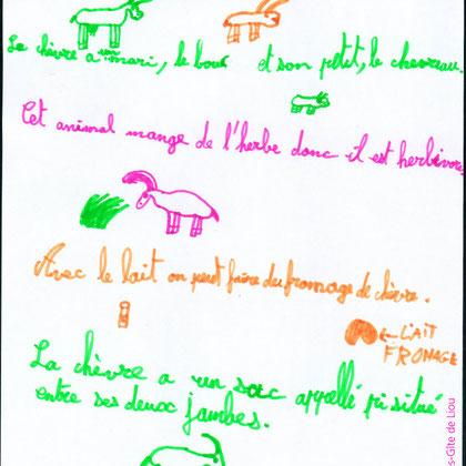 Reportage d'Antonin : La chèvre a un mari, le bouc, et son petit, le chevreau. Cet animal mange de l'herbe, donc il est herbivore...