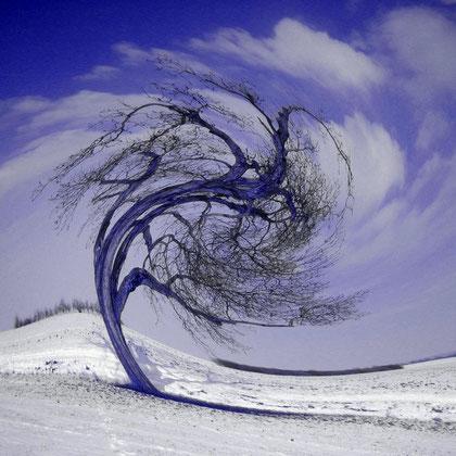 Rita Greve - Bewegung - Winterbaum 2
