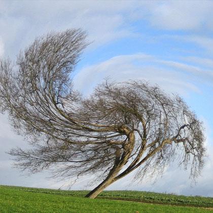 Rita Greve - Bewegung (Baum 1c)