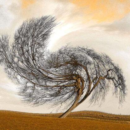 Rita Greve - Bewegung (Baum 1a)