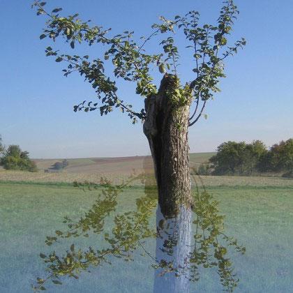 Rita Greve - Bewegung (Baum 1)