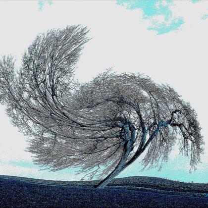 Rita Greve - Bewegung (Baum 1g)
