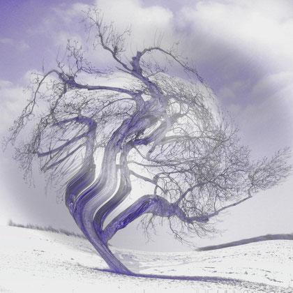 Rita Greve - Bewegung - Winterbaum 1