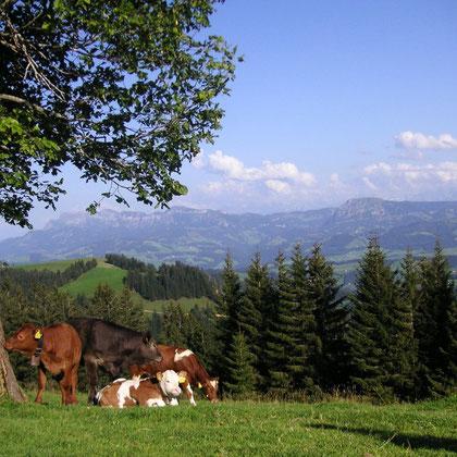 Ausflüge Solothurn und Ausflüge ab Solothurn in die ganze Schweiz mit Schweiz Ferien