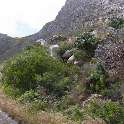 Landschaft - Fahrt zum Tafelberg
