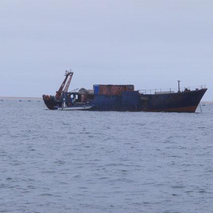 Schiff für das waschen der Austern
