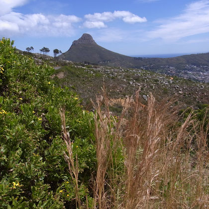 Blick auf Signal Hill