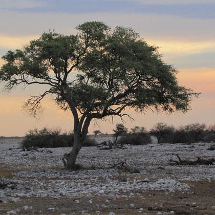 Baum am Wasserloch