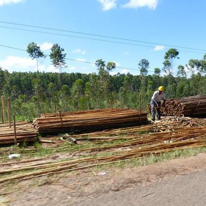 Holz wird gefällt