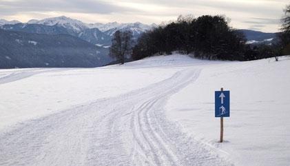Sektion Ski-Langlauf