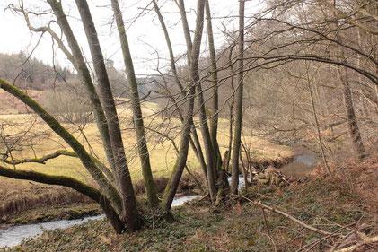 Moosalbtal in der Nähe von Fischweier (G. Franke, 07.02.17)