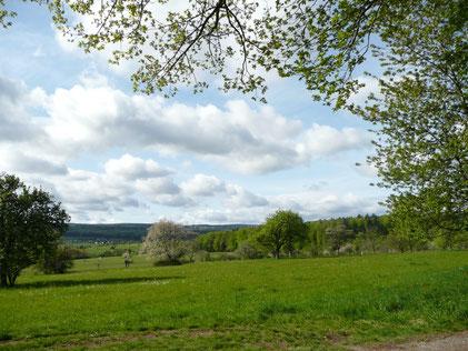 am nördlichen, oberen Rand der Mistwiesen in Nähe des Sportplatzes Ittersbach (M. Franke)