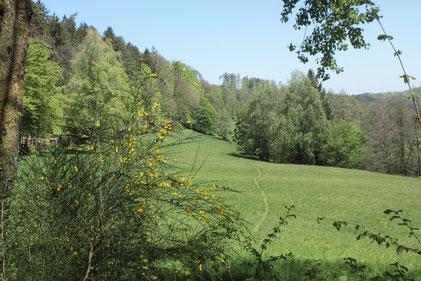 Moosalbtal - Wässerwiesen