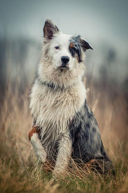 nasser Hund auf einem Gassirunden Fotoshooting