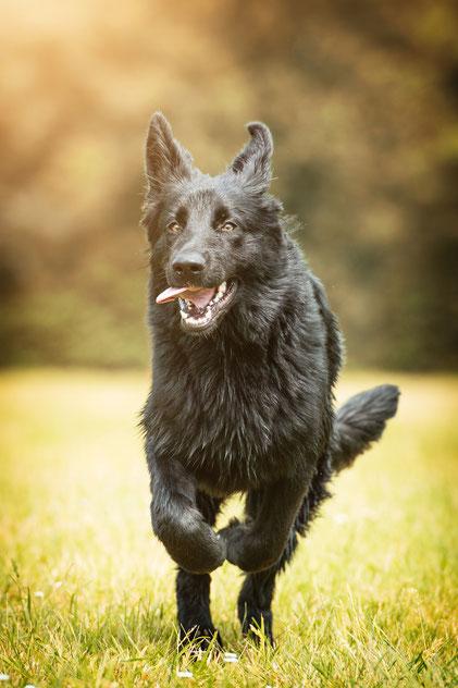 Hunde Fotoshooting auf der Gassirunde - Fuchs