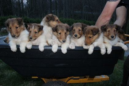 A wagonful of babies!