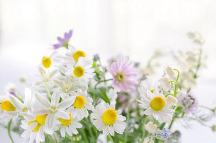 カモミールの花束の画像