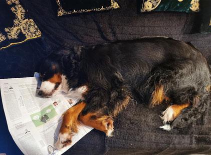 Hazel ist beim Lesen eingeschlafen.