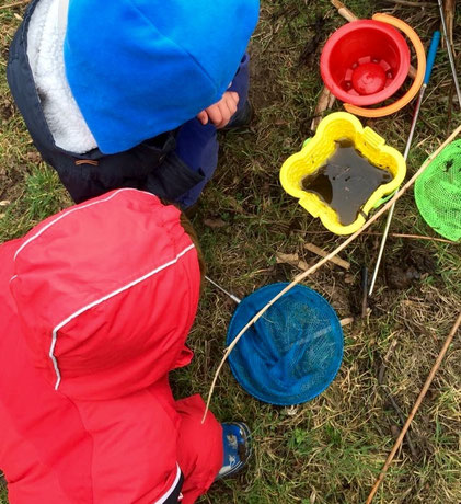 Children looking at buckets with sea creatures