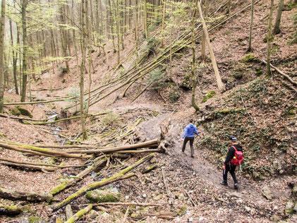 Umgestürzte Bäume liegen teilweise über dem Weg, noch sehr natürlich das Ganze
