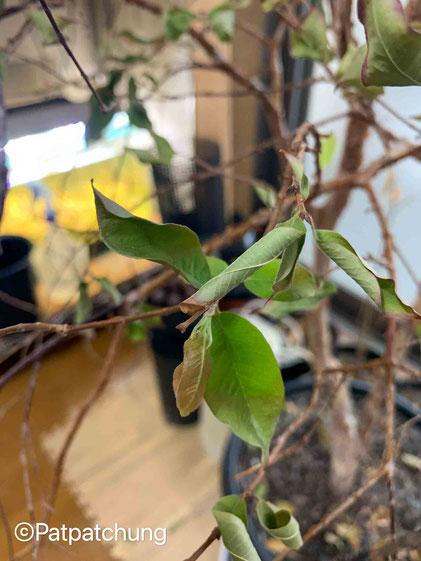 新しい葉が‼️