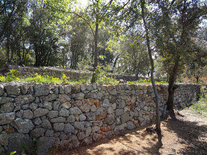 dry-stone-wall-restoration-tourtour-var-repair