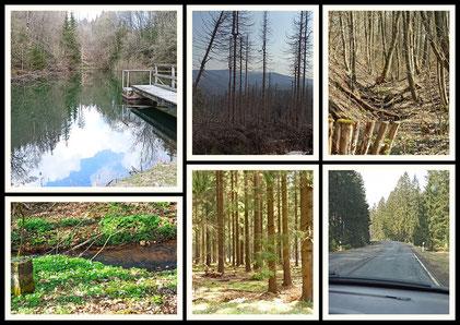 Harz - Baumsterben durch den Borkenkäfer