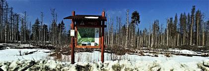 Nationalpark Harz (Foto: Travelmaus.de)