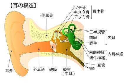 耳鳴り、突発性難聴、メニエール病は首や自律神経のトラブルから 高崎市 整体