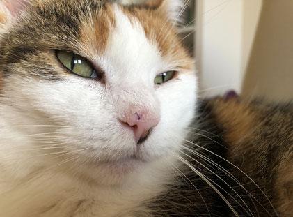 Bild: Hanni nach der OP an ihrem Nasenspiegel
