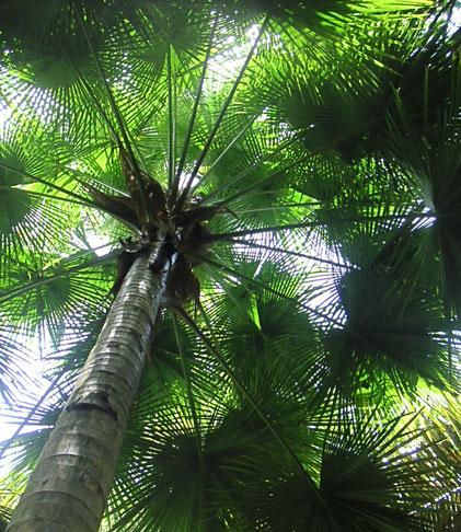 forêt ciel méditation pleine conscience programme MBCT